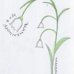 DoodlesToYou No 019 - Blumenkopf