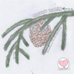 DoodlesToYou No 028 - Tannenzapfen